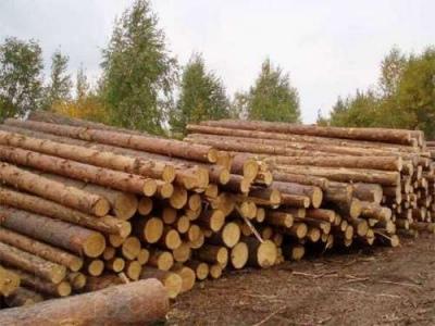 drevesina 400x300 037